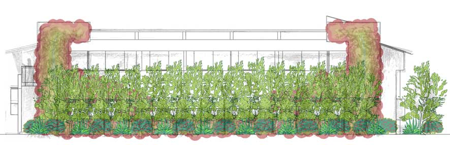 Courtyard plant growth simulation
